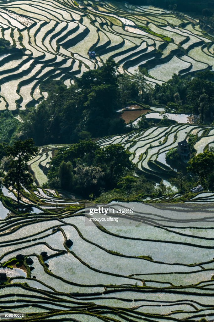 The terraced fields at spring time : Stock-Foto