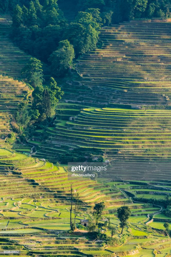 The terraced fields at spring time : Stock Photo