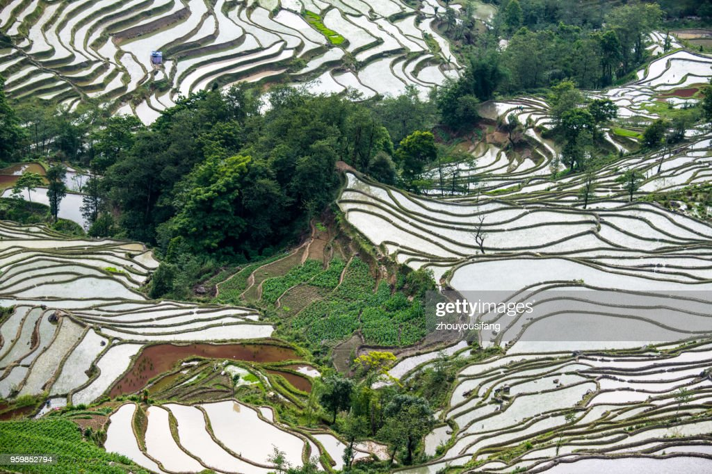 The terraced fields at spring time : Foto de stock