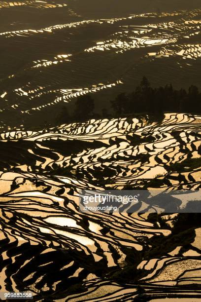 the terraced fields at sunrise - yuanyang stock pictures, royalty-free photos & images