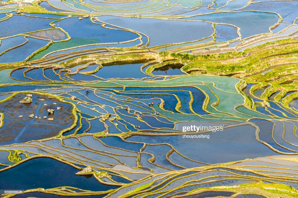 The terraced fields of spring and the people working in the terraced fields : Stockfoto