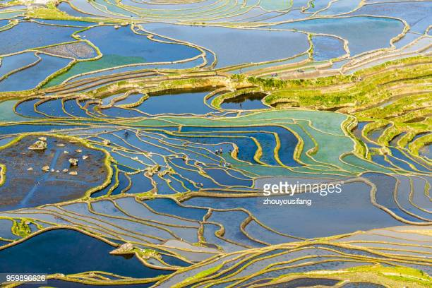 the terraced fields of spring and the people working in the terraced fields - yuanyang stock pictures, royalty-free photos & images