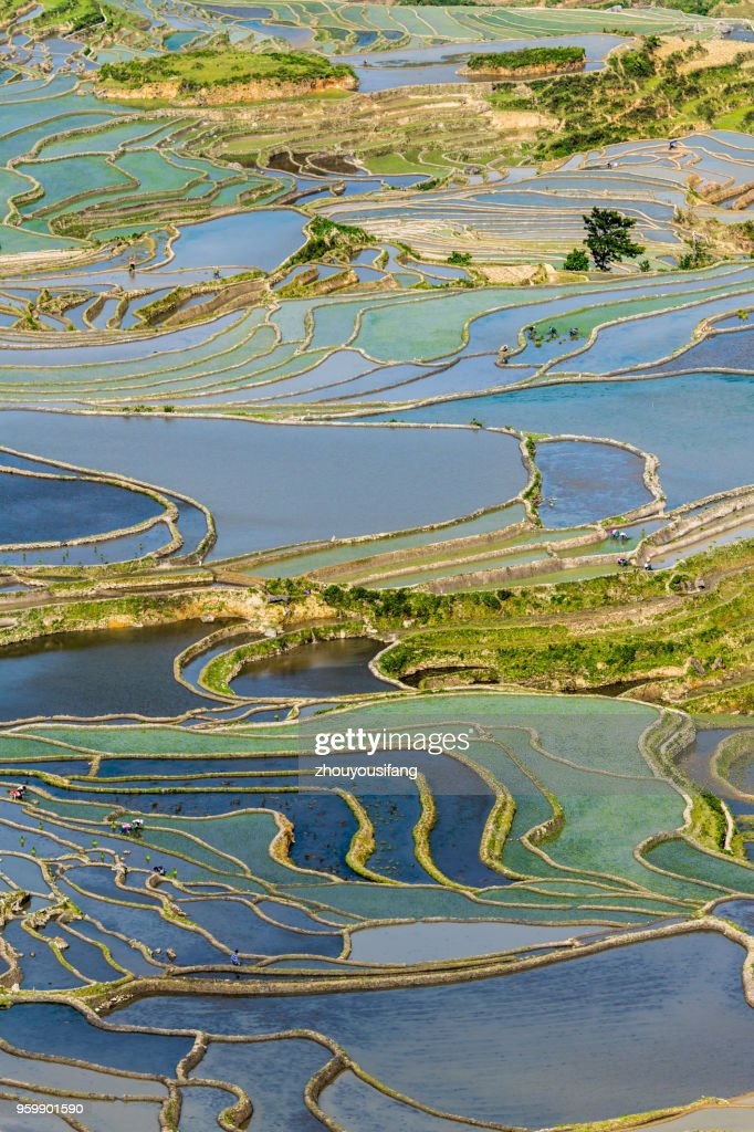 The terraced fields of spring and the people working in the terraced fields : Stock-Foto