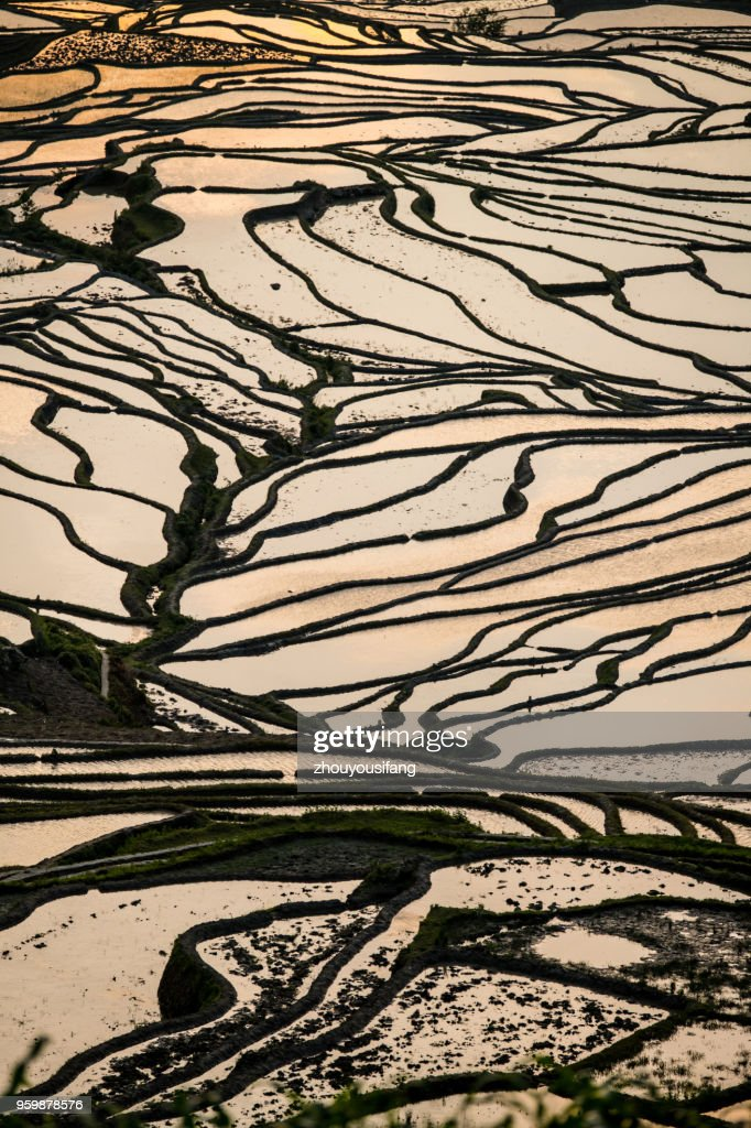 The terraced fields : Stock Photo