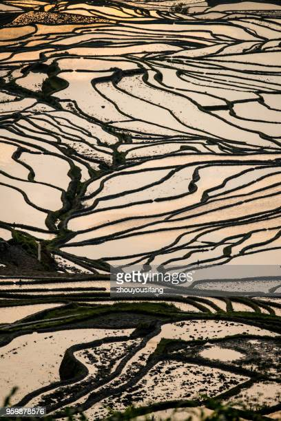 the terraced fields - yuanyang stock pictures, royalty-free photos & images