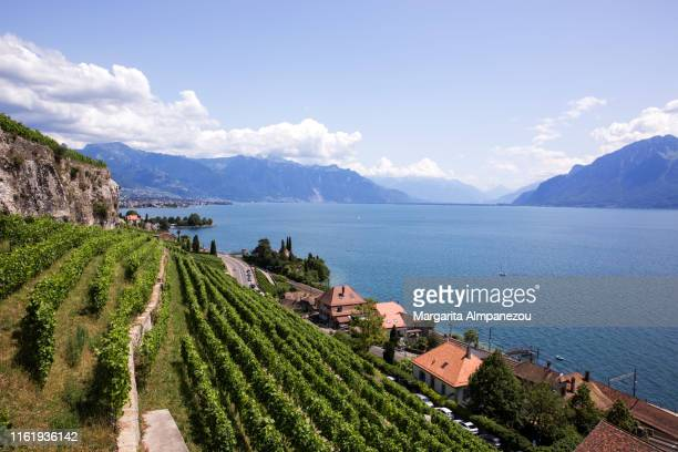 the terraced vineyards of lavaux in switzerland - vaud canton stock pictures, royalty-free photos & images