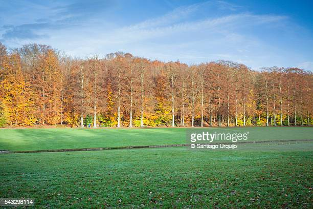 The Tervueren Park in autumn
