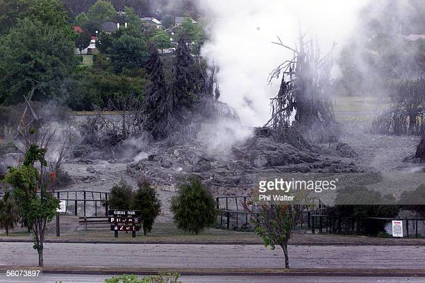 The thermal area in Kuirau Park where a Geyser erupted sending mud over the nearby area and destroying trees in the park