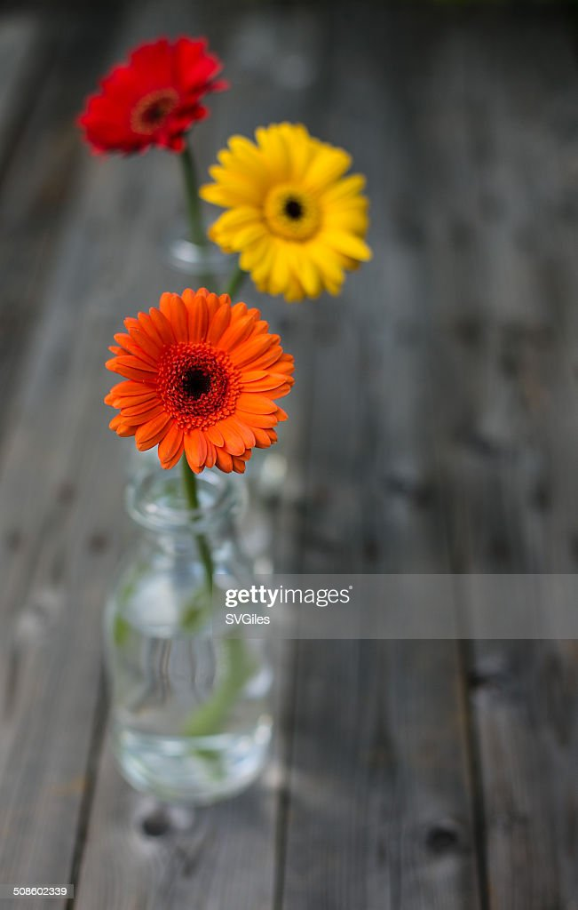 The three gerbera : Foto de stock