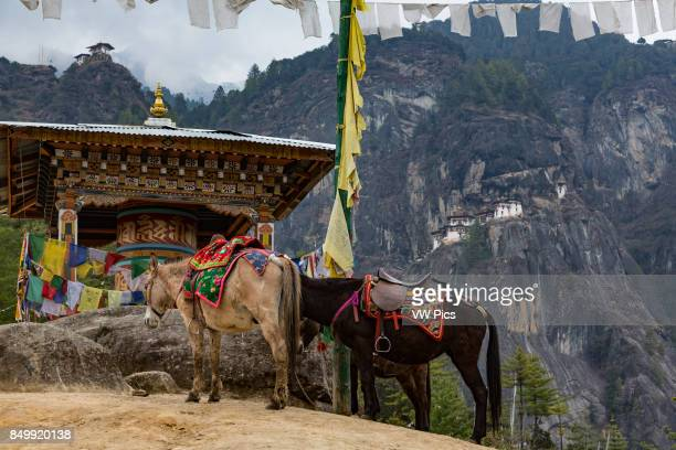 The Tiger's Nest Monastery or Taktsang Goemba is a Himalayan Bhuddist monastery perched on sheer cliffs 900 meters above the floor of the Paro Valley...
