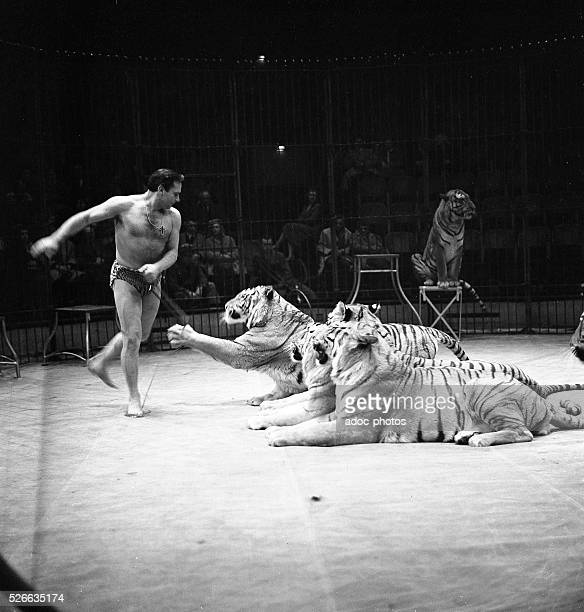 The tigers trainer Gilbert Houcke at circus Medrano In 1956