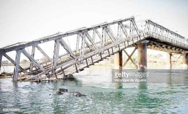 The Tigris river in Mosul is full of the dead bodies of presumed ISIS fighters killed by the Iraqi Army In a fewhour span on July 28 2017 one could...