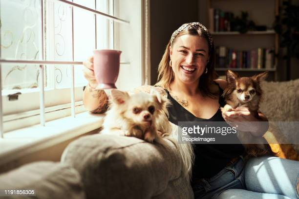 the tiniest pets can show the biggest loyalty - chesty love stock pictures, royalty-free photos & images