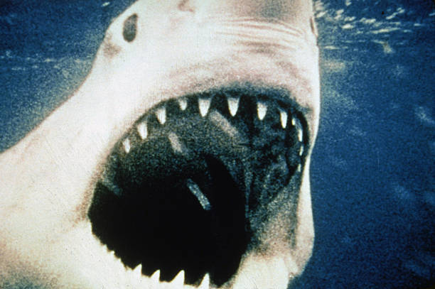 UNS: From The Archives: Steven Spielberg's Blockbuster Jaws At 45