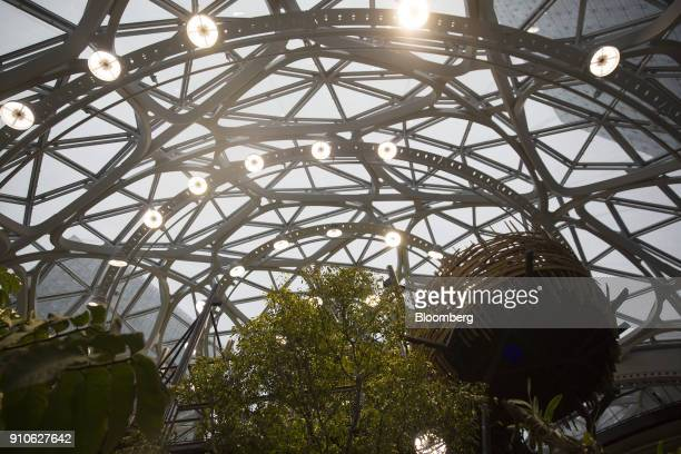 The top of a 55foottall tree nicknamed Rubi center stands inside the Amazoncom Inc Spheres in Seattle Washington US on Tuesday Jan 23 2018 The online...