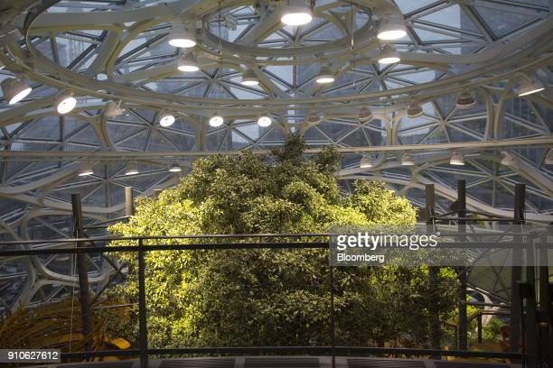 The top of a 55foottall tree nicknamed Rubi stands inside the Amazoncom Inc Spheres in Seattle Washington US on Tuesday Jan 23 2018 The online...