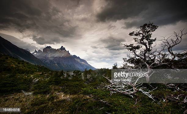 the torres del paine mountains on a cloudy day. - alex saberi 個照片及圖片檔