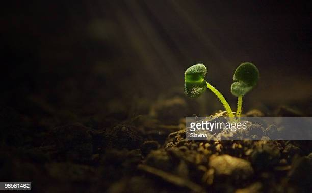the touch of life - seedling stock pictures, royalty-free photos & images
