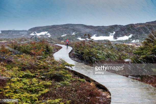 the trail in snowing - newfoundland and labrador stock pictures, royalty-free photos & images