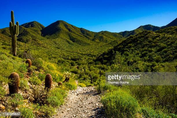 the trail in the desert toward the mountains - südwesten stock-fotos und bilder
