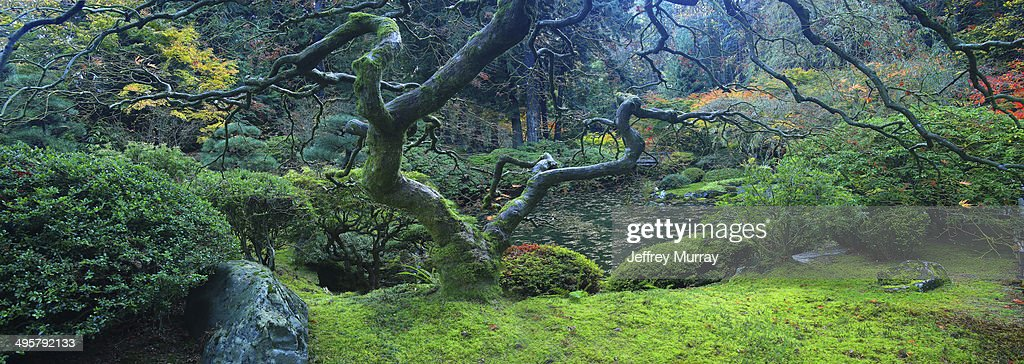 The tranquil Japanese Garden located in the west hills of the city of Portland, Oregon. : Stock Photo