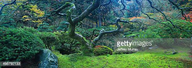 the tranquil japanese garden located in the west hills of the city of portland, oregon. - japanese garden stock photos and pictures