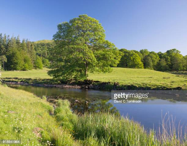 the tranquil river brathay, elterwater, lake district national park, cumbria, england, uk - riverbank stock pictures, royalty-free photos & images