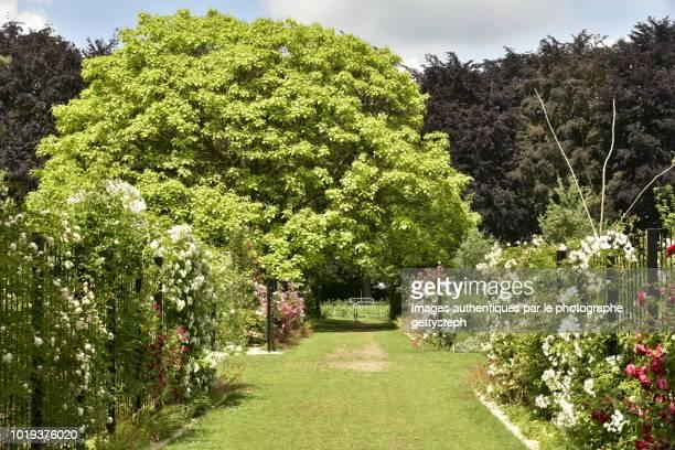 the tranquillity turfy alley between metallic fences in springtime - arboreto foto e immagini stock