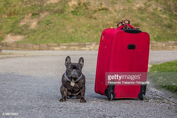 the traveler dog