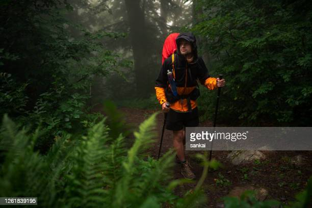 the traveler walks through the forest - image stock pictures, royalty-free photos & images