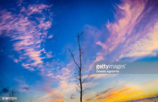 the tree and the sunset - special:whatlinkshere/file:lucerne_circle,_orlando,_fl.jpg stock pictures, royalty-free photos & images