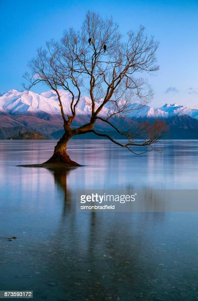 the tree at lake wanaka in new zealand - international landmark stock pictures, royalty-free photos & images