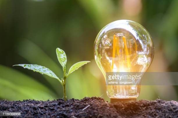 the tree growing on the soil in a light bulb. - 電気 ストックフォトと画像