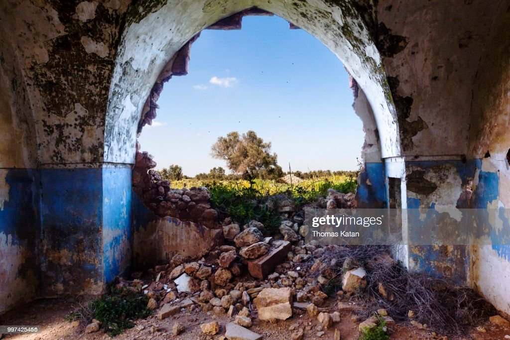 The Tree in the Arch : Stock Photo