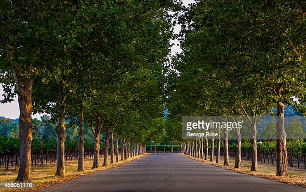 The tree lined entrance to Sonoma County's Stonestreet Winery in Alexander Valley is viewed on August 7 near Healdsburg California Hundreds of...