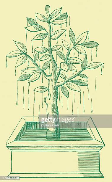 The Tree of Life or the Weeping Tree plantedi in the states of Prester John From facsimile of wood engraving 16th century PJ Legendary figure in...