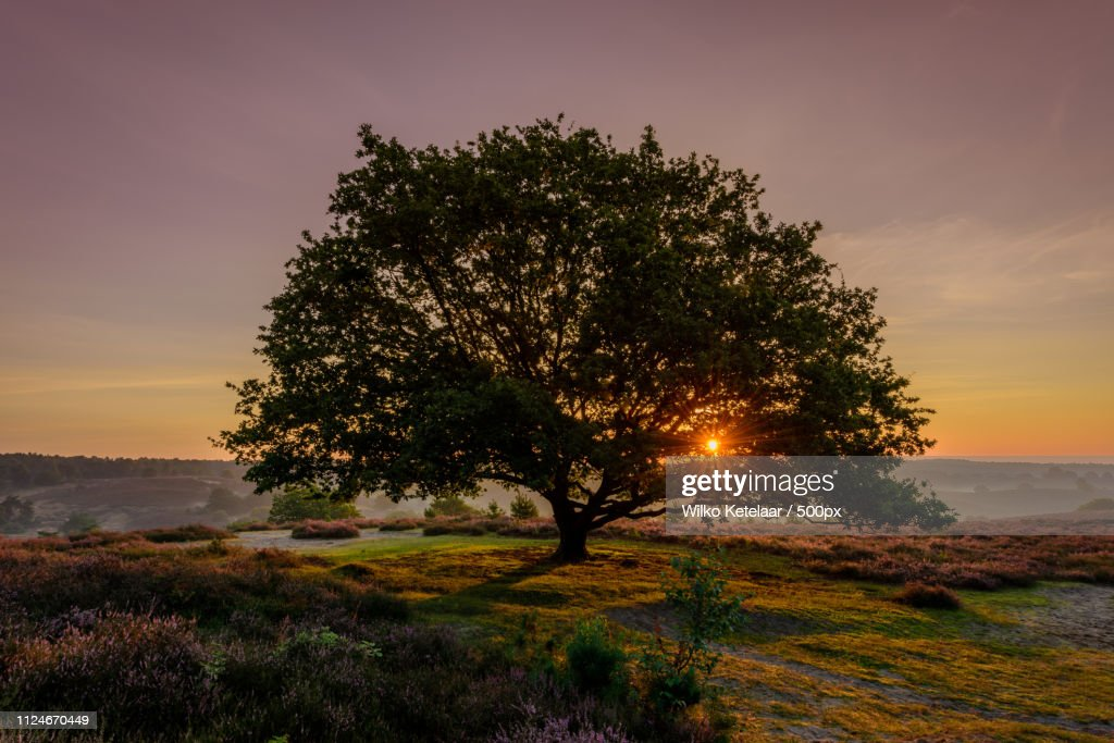 The Tree : Stock Photo