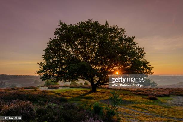 the tree - zonsopgang stock pictures, royalty-free photos & images