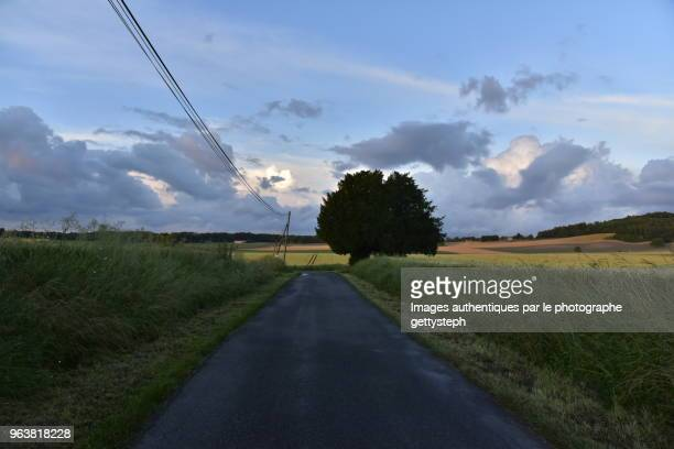 The tree with two trunks along rural road under evening light