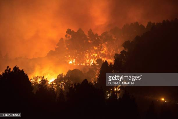 TOPSHOT The trees above the road of the forested peaks of Valleseco are engulfed in flames during the new forest fire that broke out just days after...