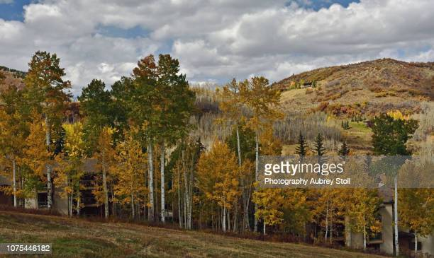 The Trees of Snowmass