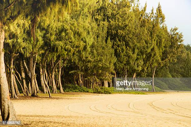 The Trees of Waimanalo Beach