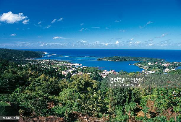 The tropical forest surrounding Port Antonio Jamaica