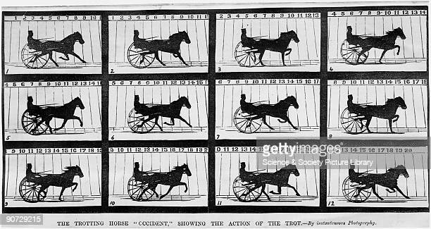 The trotting horse 'Occident' 1879 Kinetograph from 'Century' magazine of twelve successive views showing the movement of a horse by the...