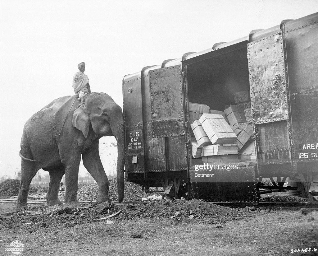 Elephant Pushing Boxcar : Nachrichtenfoto