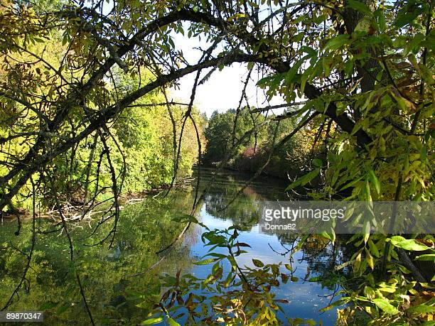 the tualatin river national wildlife refuge - 国立野生生物保護区 ストックフォトと画像