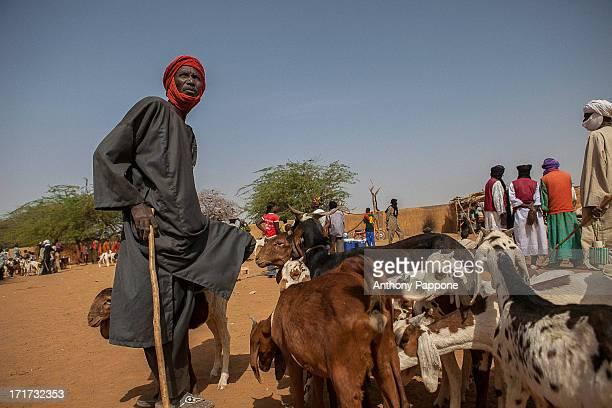 CONTENT] the Tuareg shepherd to the market of Gorom Gorom goats Sahel northern Burkina Faso
