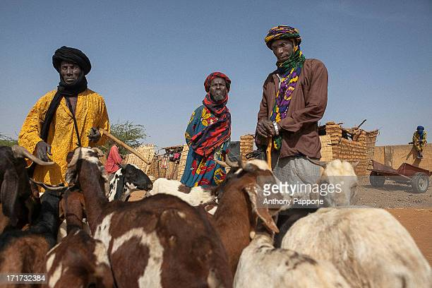 CONTENT] the Tuareg shepherds to the market of Gorom Gorom goats Sahel northern Burkina Faso