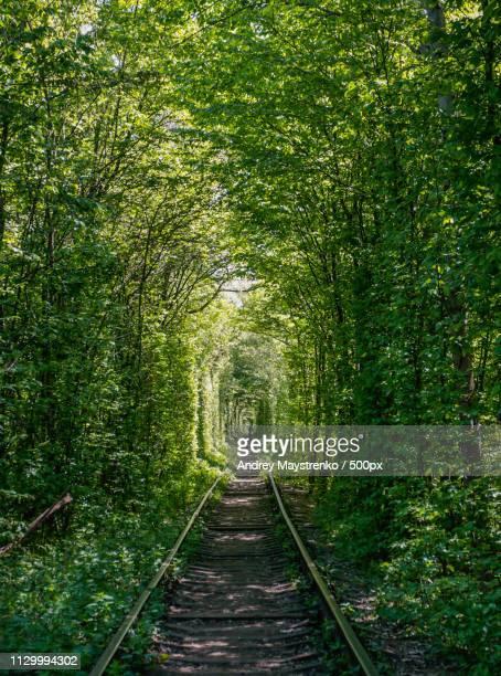 the tunnel of love - ウクライナ トンネル ストックフォトと画像