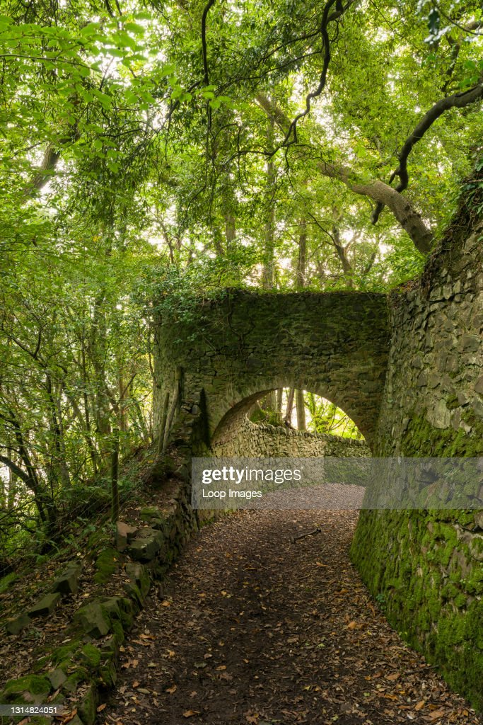 The tunnels in Yearnor Wood along the South West Coast Path in Exmoor National Park : News Photo